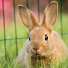 Goed konijnenvoer: Supreme Science Selective Rabbit
