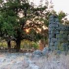 Boekrecensie: Golan (we leven nog) – Jits Wijnalda
