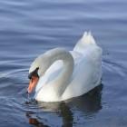 Black Swan, balletfilm met horrorelementen
